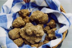 Eataly_White Truffles