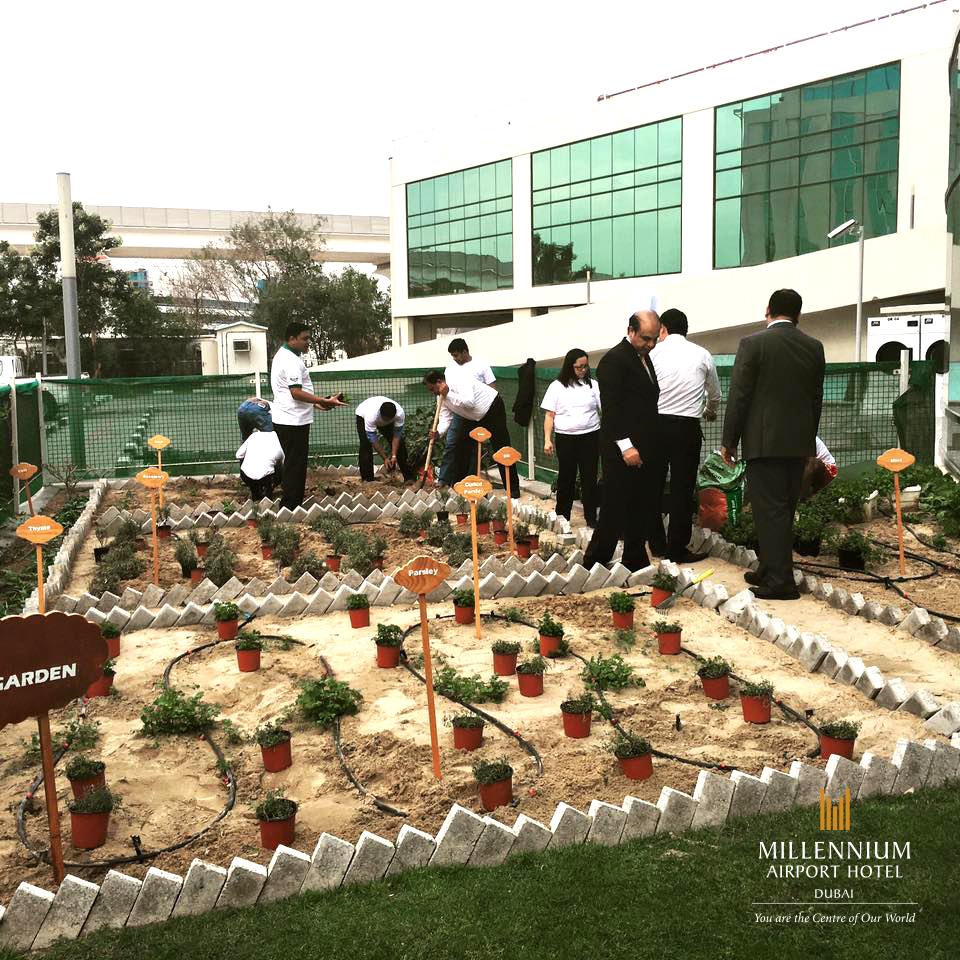 Millennium Airport Hotel Dubai Plants a Herb and Vegetable Garden
