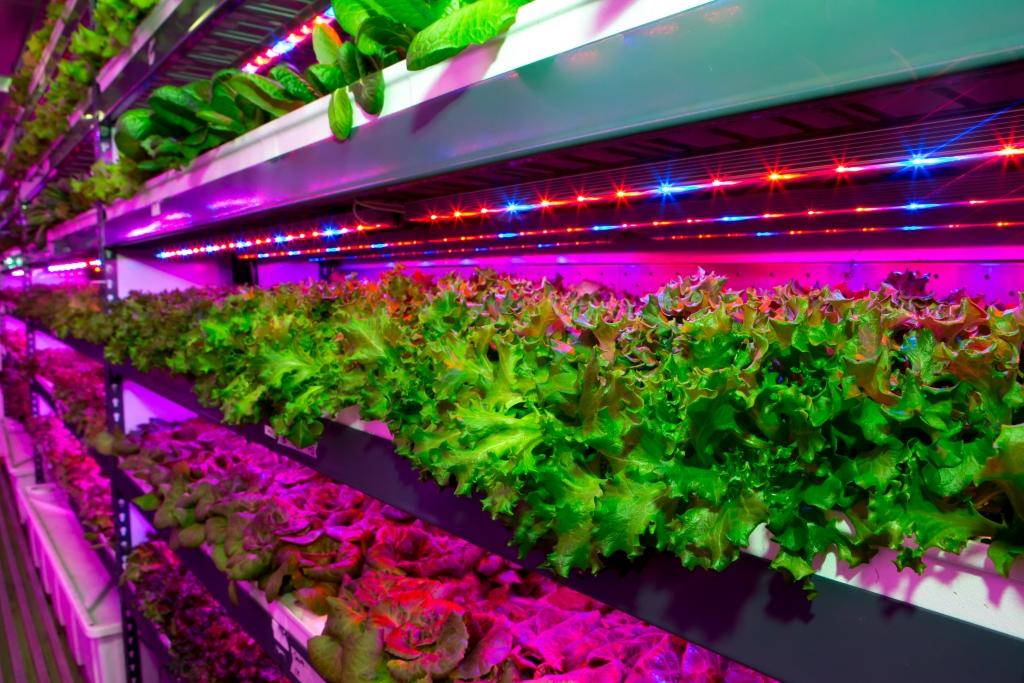 Vertical farming facility