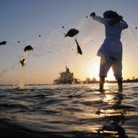 GCC forecasts Growth In Demand For Seafood