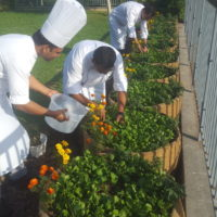 Farm to Hotel: Organic urban farming in hospitality