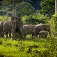 Thailand's Tourism Authority supports elephant welfare through new collaboration